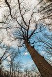 Взгляд искусства, абстрактных и художнических fisheye Ветвь леса и дерева Стоковое фото RF