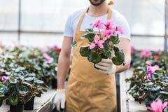 Взгляд конца-вверх бака с цветками Cyclamen стоковое фото rf