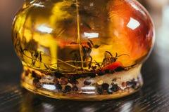 взгляд конца-вверх дополнительного виргинского масла с специями Стоковые Фото