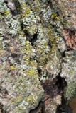 Взгляд конца-вверх малой глубины коры дерева поля Стоковое Фото