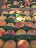 взгляд конца-вверх свежих органических персиков с зелеными листьями стоковое фото rf