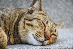 Взгляд конца-вверх спать кота стоковые изображения rf