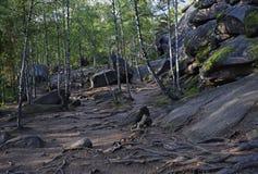 Взгляд корней деревьев и камней в лесе Стоковое Изображение