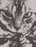 Взгляд кота острый и серьезный стоковое изображение