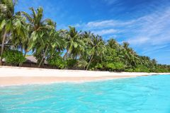 Взгляд красивого пляжа с тропическими ладонями Стоковые Изображения RF