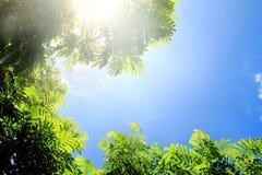 Взгляд красивой природы зеленых ветвей дерева на голубом небе с светом солнца имеет космос экземпляра Стоковые Изображения
