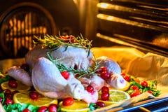 Взгляд крупного плана всего сырцового цыпленка с свежими клюквами петрушки и оранжевыми кусками на олове подноса выпечки подготов Стоковая Фотография