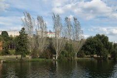 Взгляд ландшафта деревьев на банке реки Mondego стоковые фотографии rf