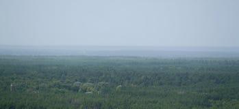 взгляд ландшафта леса в зеленоголубых тонах и помохе Стоковая Фотография