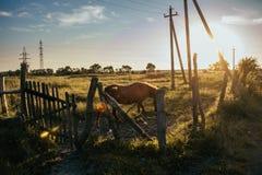Взгляд ландшафта на поле с лошадью стоковые фотографии rf