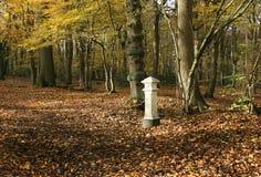Взгляд ландшафта осени в древесинах Broxbourne с столбом налога угля который расположен глубоко в древесинах Стоковое Фото