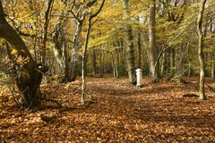 Взгляд ландшафта осени в древесинах Broxbourne с столбом налога угля который расположен глубоко в древесинах Стоковые Изображения RF