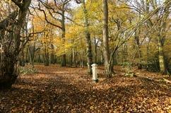 Взгляд ландшафта осени в древесинах Broxbourne с столбом налога угля который расположен глубоко в древесинах Стоковые Изображения