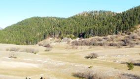 Взгляд леса ландшафта горы панорамный видеоматериал