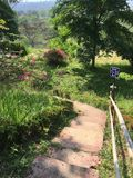 Взгляд 009 леса Greenway Стоковое Изображение RF