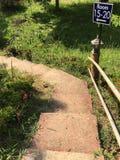 Взгляд 011 леса Greenway Стоковая Фотография