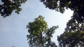 Взгляд лесных деревьев и голубое небо Стоковые Фото