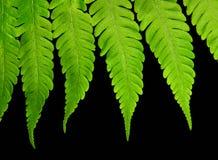 взгляд макроса джунглей папоротника Стоковое Фото