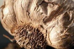 Взгляд макроса корня черного чеснока стоковое изображение
