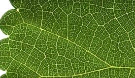 взгляд макроса листьев Стоковое фото RF