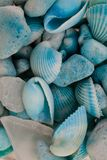 Взгляд макроса seashells seashells seashell собрания предпосылки близкие вверх Текстура голубых seashells Стоковое Изображение