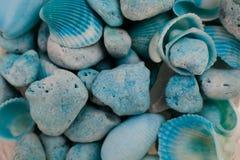 Взгляд макроса seashells seashells seashell собрания предпосылки близкие вверх Текстура голубых seashells Стоковые Фото