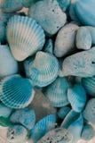 Взгляд макроса seashells seashells seashell собрания предпосылки близкие вверх Текстура голубых seashells Стоковые Фотографии RF