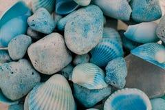 Взгляд макроса seashells seashells seashell собрания предпосылки близкие вверх Текстура голубых seashells Стоковое Изображение RF