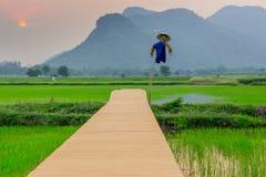 Взгляд места отдыха для фермера на террасе риса, Kanchanaburi, стоковая фотография