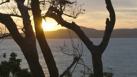 Взгляд моря через древесины сток-видео