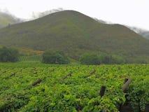Взгляд над виноградником к горам на дождливый день Стоковые Фото