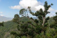 Взгляд над зоной guantanamo Кубой национального парка Alejandro de Гумбольдта Место всемирного наследия Unesco стоковая фотография rf