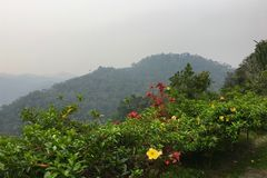 Взгляд национального парка Ranomafana и тропических тропических лесов в Мадагаскаре Стоковое Фото