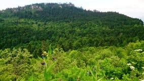 Взгляд на горе, покрытой с лесом стоковое фото