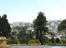 Взгляд на городке Хеврона от Metochion монастыря святой троицы стоковые фотографии rf