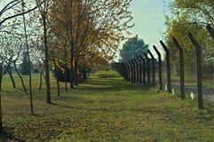 Взгляд на деревьях и упаденных листьях в парке на осени Стоковая Фотография RF
