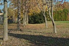 Взгляд на деревьях и упаденных листьях в парке на осени Стоковые Фотографии RF