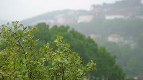 Взгляд на деревьях под проливным дождем и ветром Шторм в концепции северных регионов Концепция урагана видеоматериал