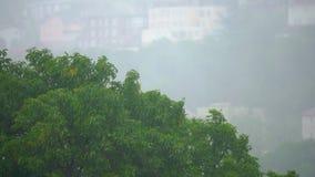 Взгляд на деревьях под проливным дождем и ветром Шторм в концепции северных регионов Концепция урагана сток-видео