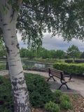 Взгляд на заливе грузина от деревянной скамьи под деревом березы на парке пункта захода солнца в Collingwood Стоковое фото RF