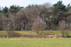 Взгляд на невозделанных площади пастбищ и лугов и зоне дерева в emsland Германии rhede стоковое изображение
