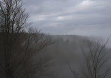 Взгляд на туманном елевом лесе и холме дерева с чуть-чуть foregro дерева Стоковые Изображения