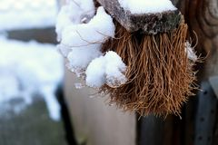 Взгляд на щетке под хлопьями снега Стоковое фото RF