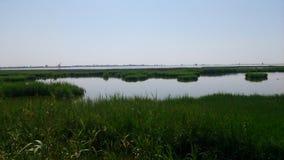 Взгляд некоторых полей риса стоковое изображение rf