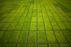 взгляд неочищенных рисов поля Стоковая Фотография