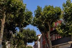 взгляд низкого угла красивых зеленых деревьев в традиционном французском городке стоковая фотография rf