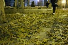 Взгляд ночи земли городской площади с почвой полной падения Стоковые Изображения