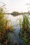 Взгляд озера в природном парке Vacaresti, городе Бухареста, Румынии Стоковое Изображение