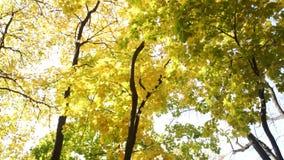Взгляд озера от леса с желтыми листьями видеоматериал