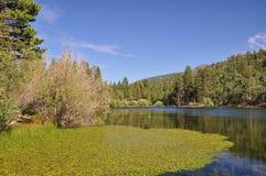 взгляд озера jenks стоковые изображения